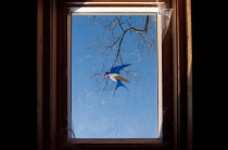 window bird
